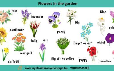 Best spring flowers